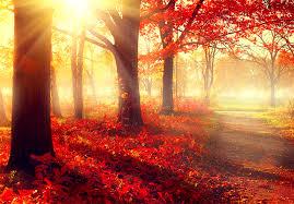 fall-image